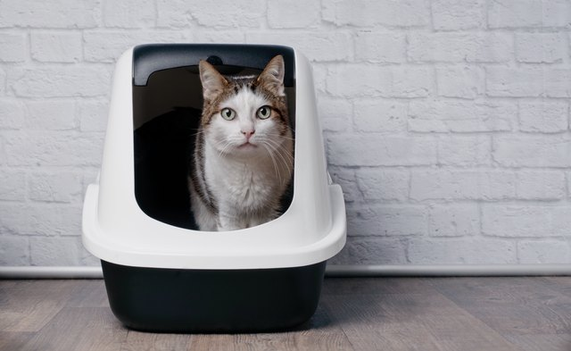 Tabby cat sitting in a litter box and look to the camera.