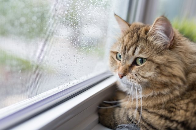 Cat near window in raining day