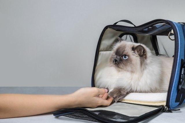 Cat in pet carrier. Copy Space