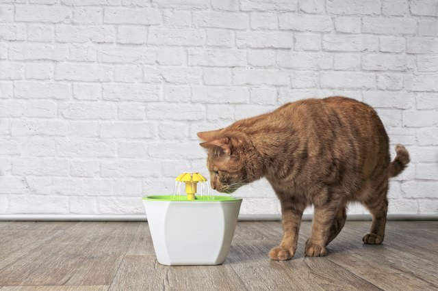 Thirsty ginger cat looking curious to a pet drinking fountain. Side view with copy space.