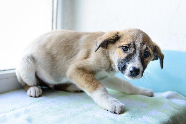 portrait little puppy
